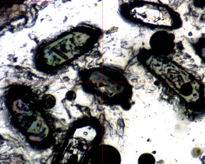 Teledyne CETAC - Grains de zircones 25 µm